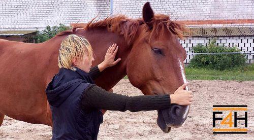 Usuwanie napięć u konia