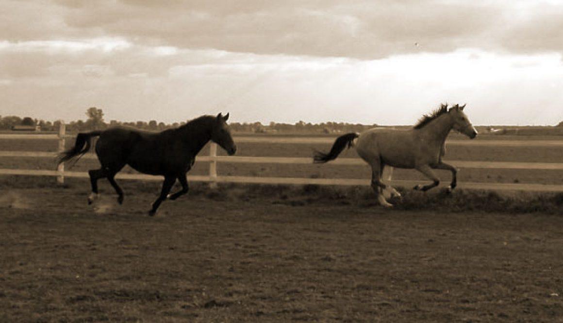 konie w ruchu