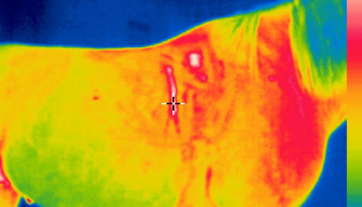 Termograficzna kontrola dopasowania siodła